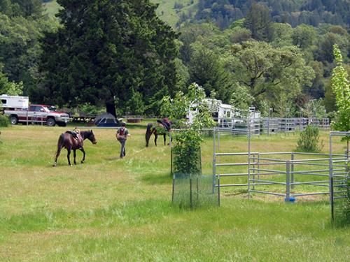 cuneo_horse2